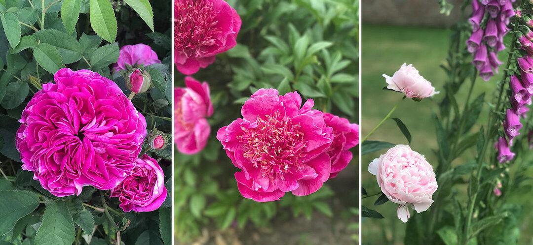 Mon Jardin en Juin